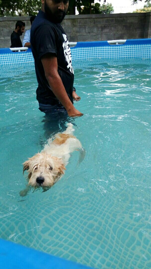 Dog,Dog breed,Canidae,Swimming pool,Carnivore,Fun,Leisure,Swimming,Sporting Group,Recreation