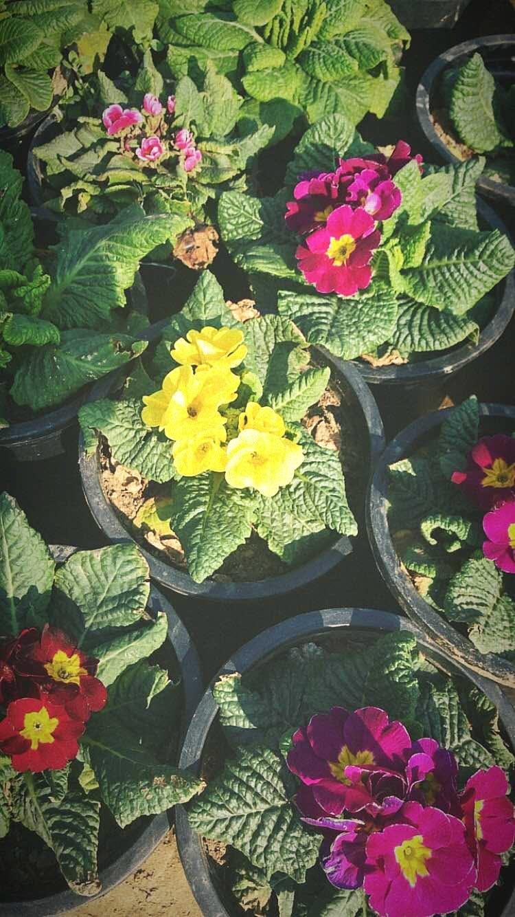 image - Nisha Nursery