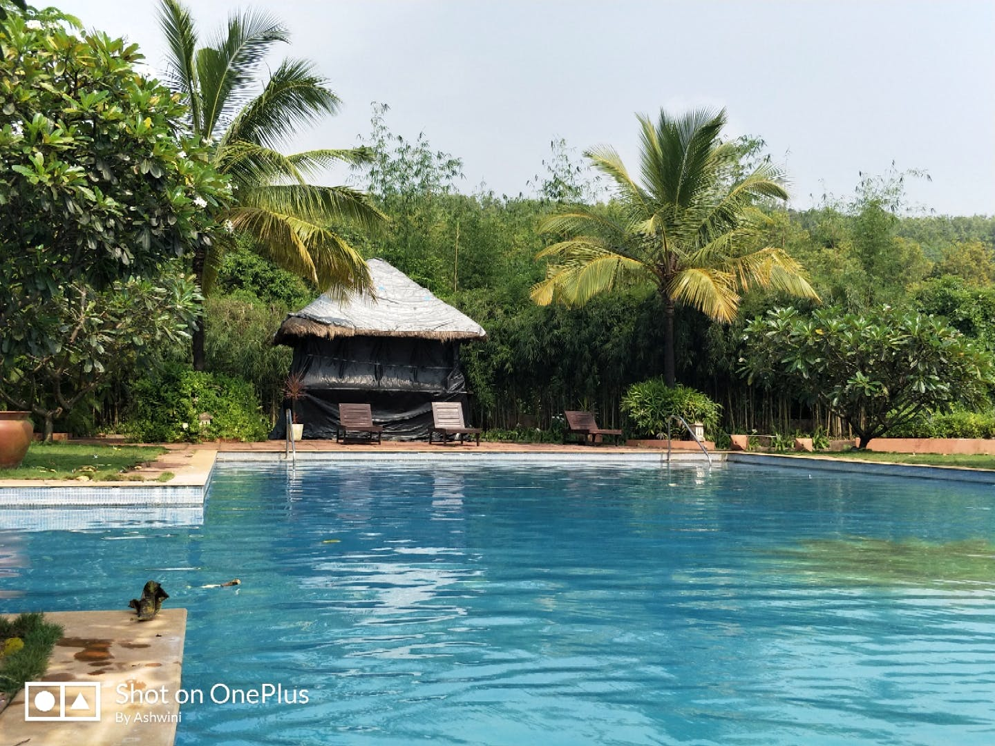 Swimming pool,Natural landscape,Property,Leisure,Vacation,Resort,Palm tree,Water,Tropics,Tree