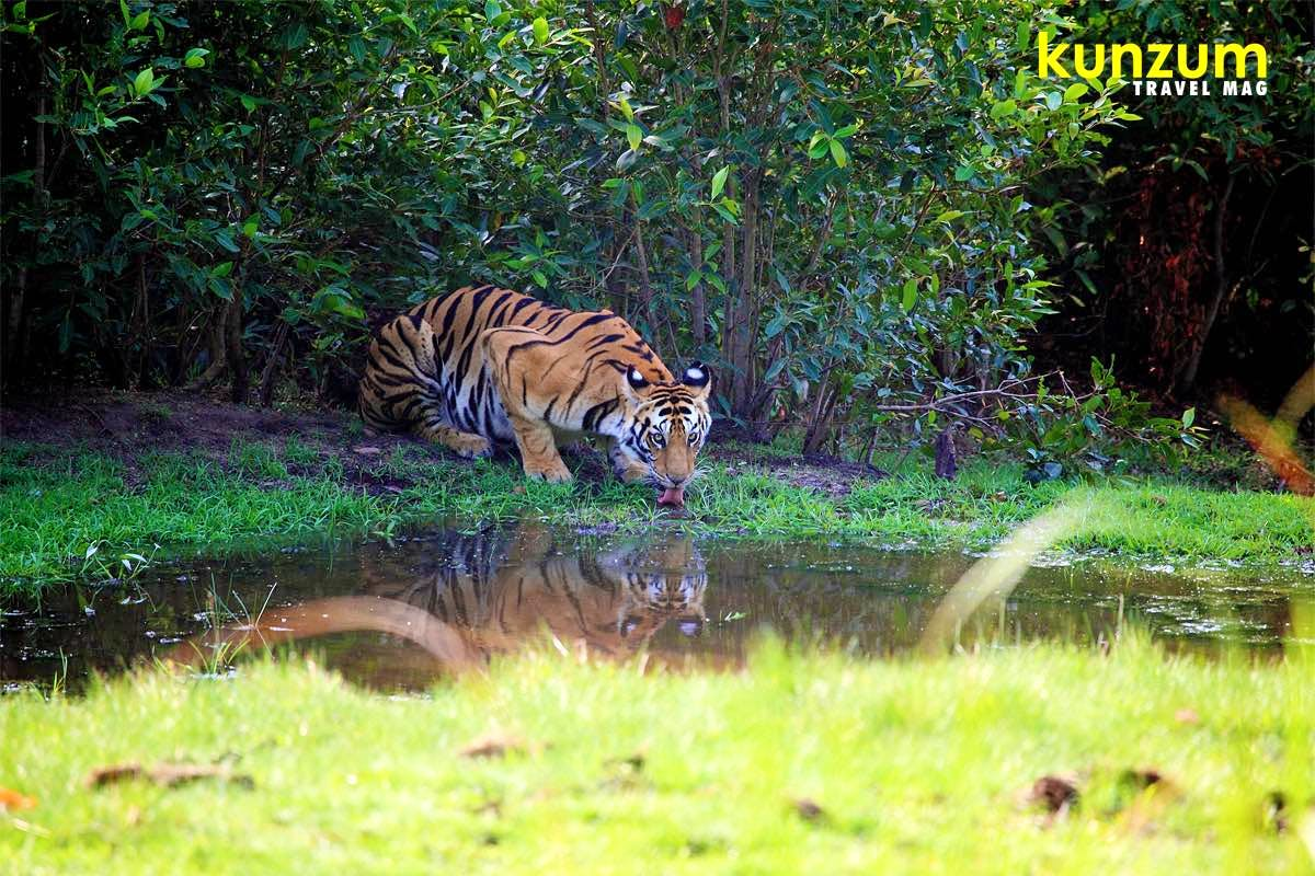 Go On A Safari, Spot The Tiger{s} & More At Bandhavgarh National Park