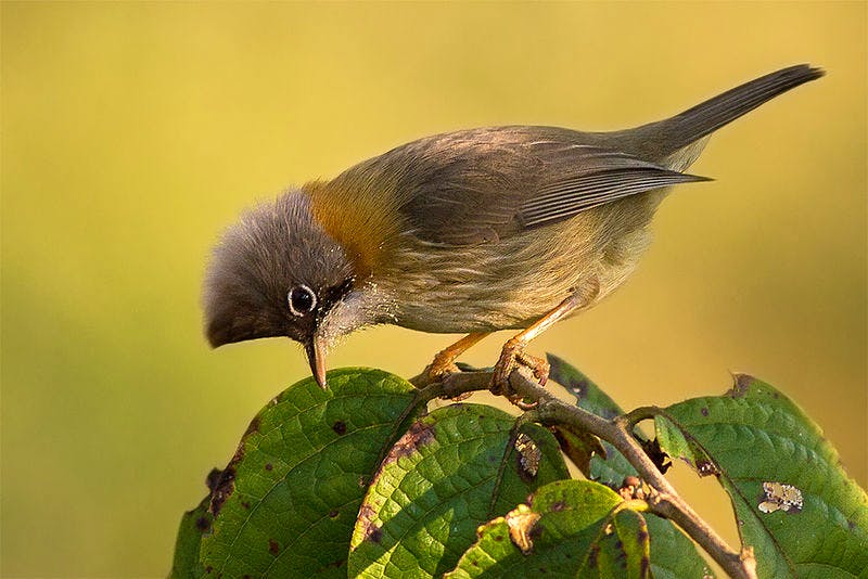 image - Calling All Birdwatchers: 5 Places To Hit Up This Winter