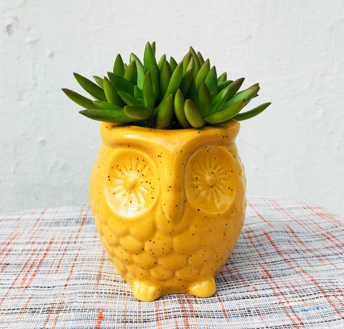 Pineapple,Ananas,Yellow,Fruit,Plant,Flowerpot,Food,Ceramic,Vase,Houseplant