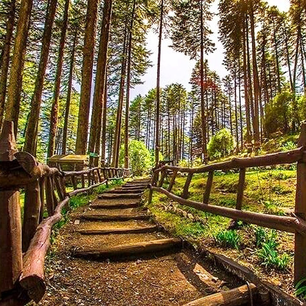 Tree,Forest,Nature,Natural environment,Natural landscape,Nature reserve,Vegetation,Wilderness,Old-growth forest,Trail
