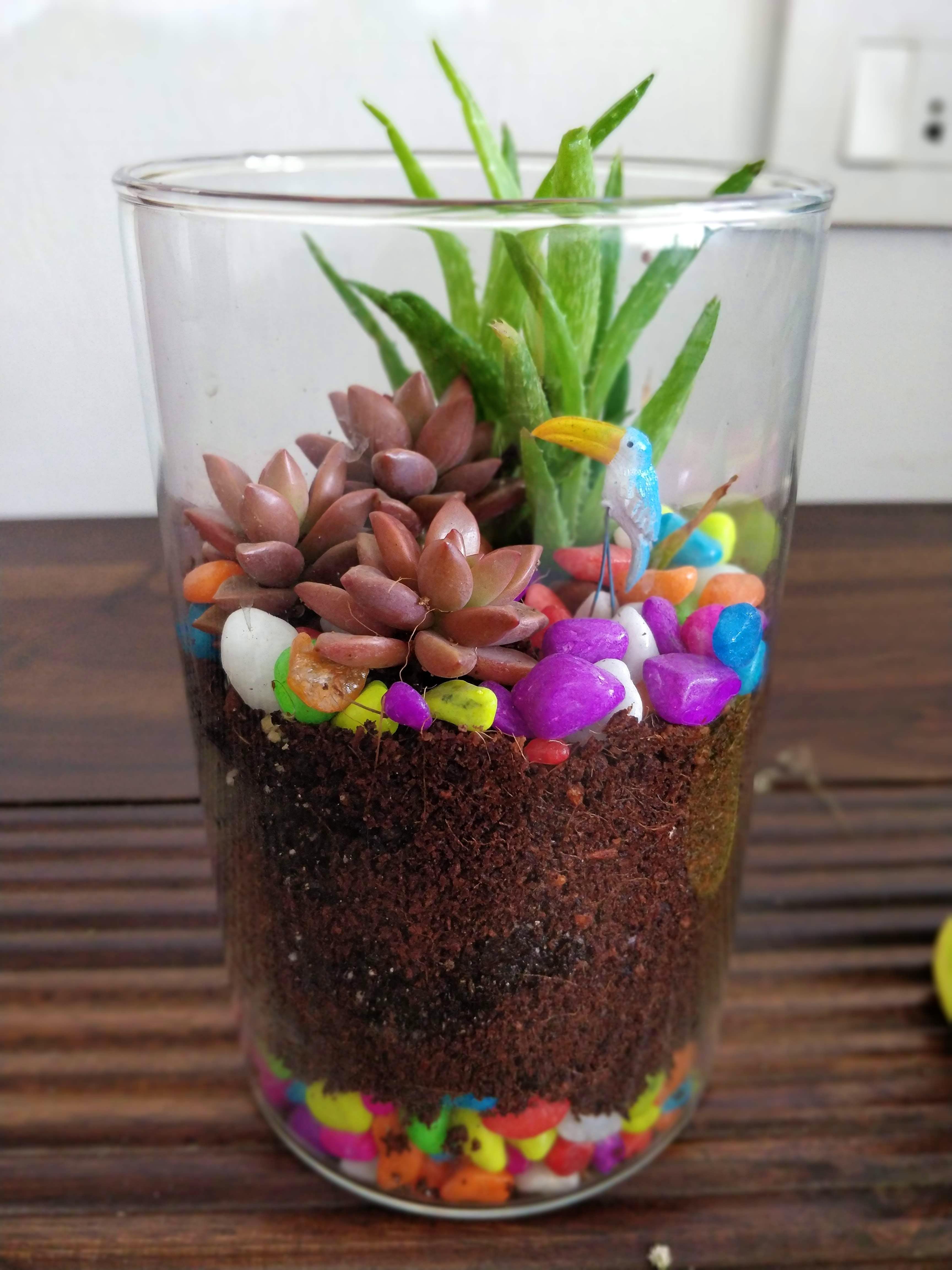 Flowerpot,Plant,Flower,Houseplant,Easter,Tulip