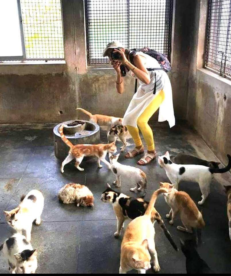 image - These Shelters & NGOs In Hyderabad Are Keeping Animals Safe & You Could Volunteer Too