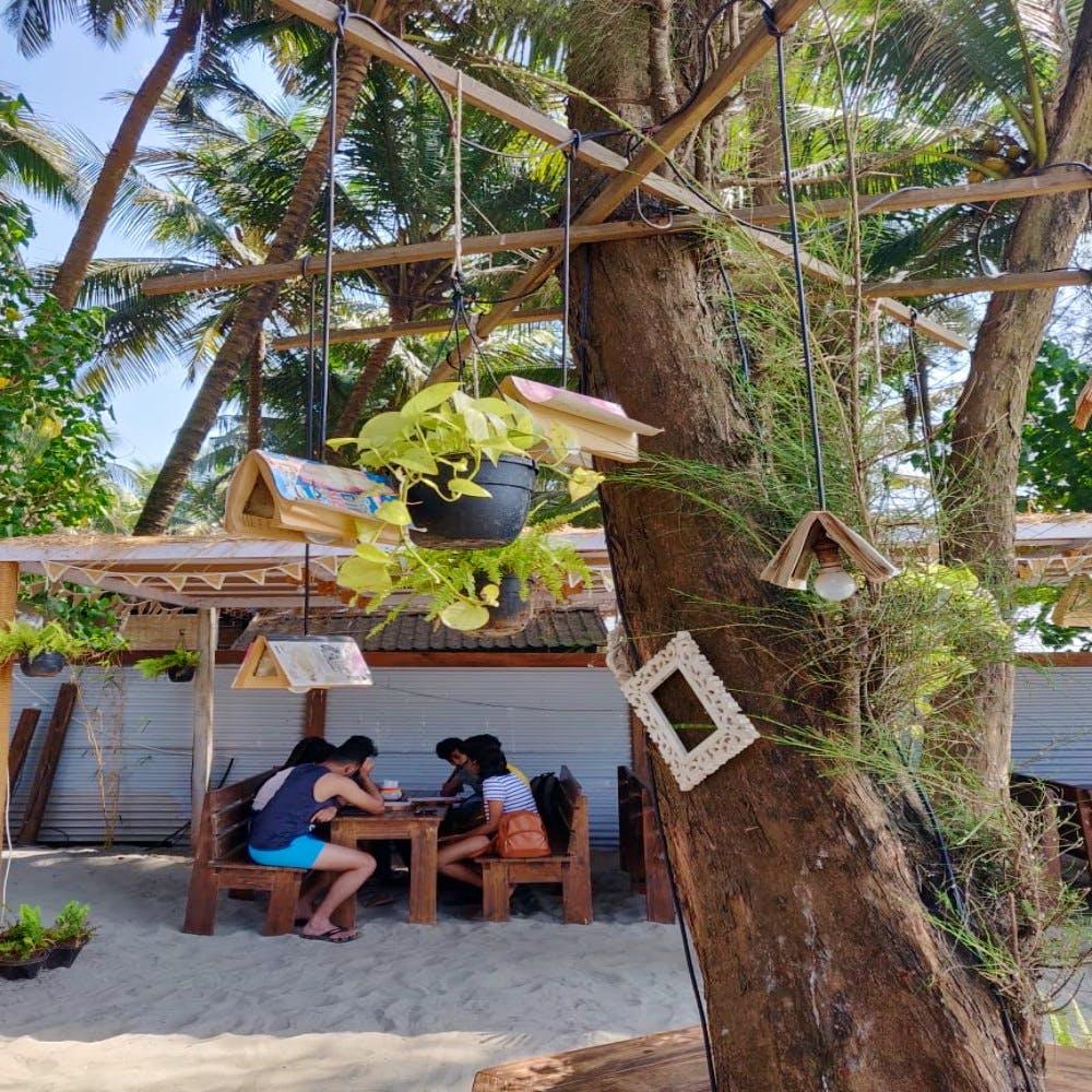 Tree,Botany,Plant,Vacation,Woody plant,Leisure,House,Adaptation,Resort,Jungle