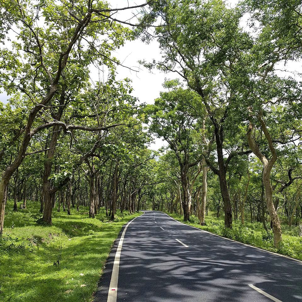 Tree,Natural landscape,Vegetation,Natural environment,Nature reserve,Road,Woody plant,Forest,Thoroughfare,Plant
