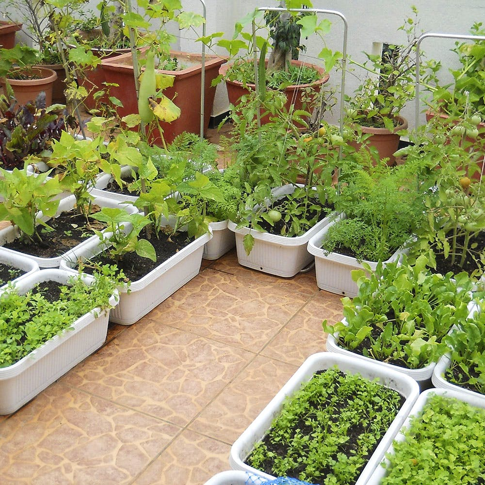 Purna Organics: Set Up An Organic Garden | LBB, Bangalore