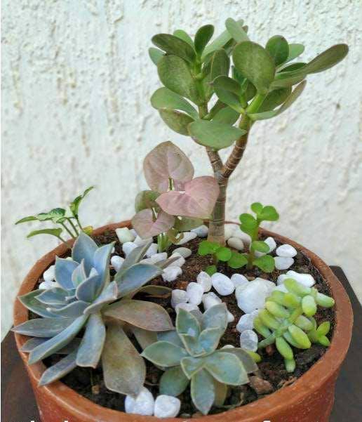 image - Eco Souvenirs