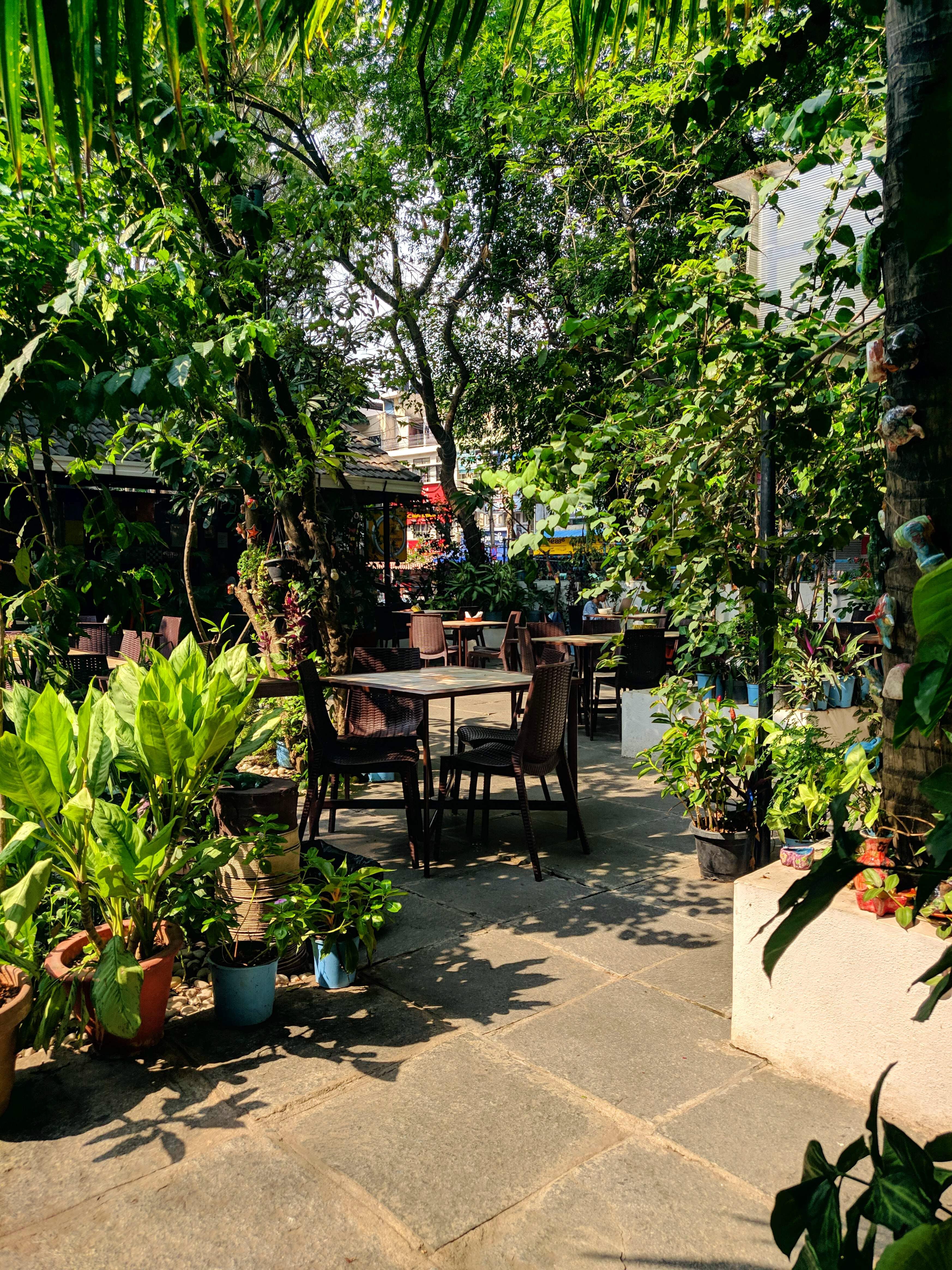 Vegetation,Garden,Botany,Tree,Botanical garden,Plant,Spring,Courtyard,Landscaping,Furniture