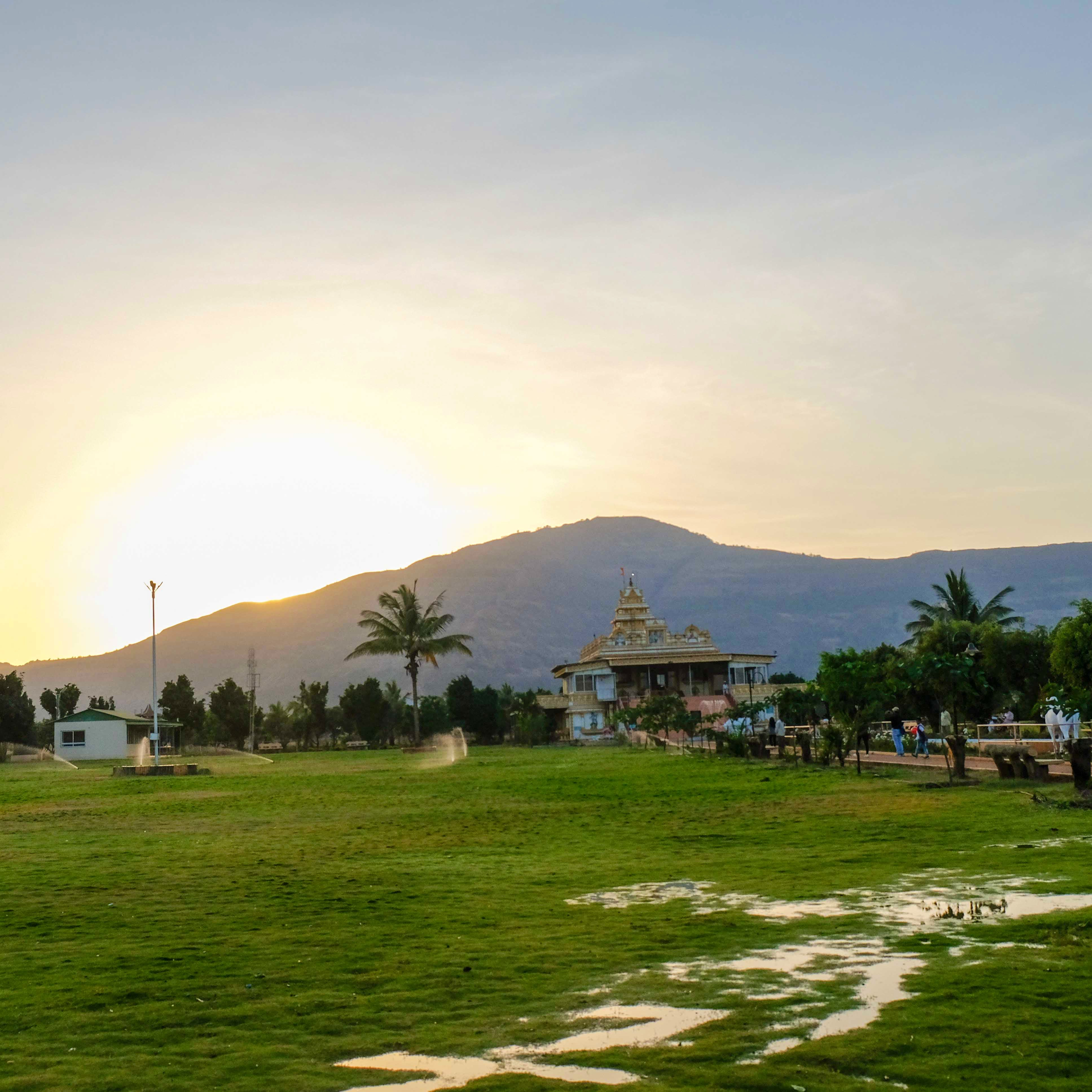 Sky,Daytime,Tree,Palm tree,Morning,Hill,Grass,Cloud,Arecales,Land lot