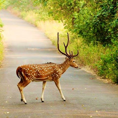 Wildlife,Deer,Antler,Reindeer,Terrestrial animal,Horn,Snout,Organism,Elk,Fawn