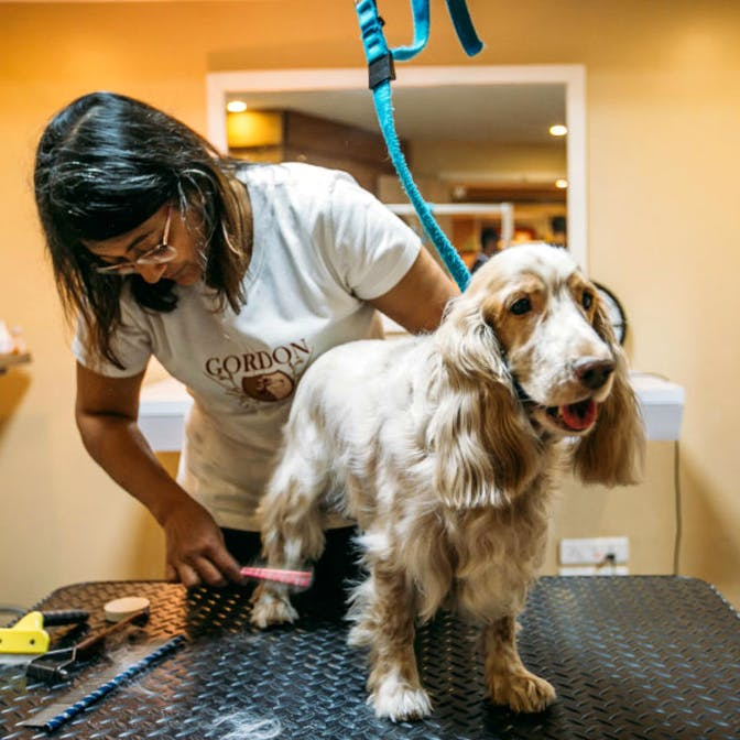 image - Treat Your Pets To A Day Of Comfort And Luxury At Some Of The Best Pet Spas In Pune