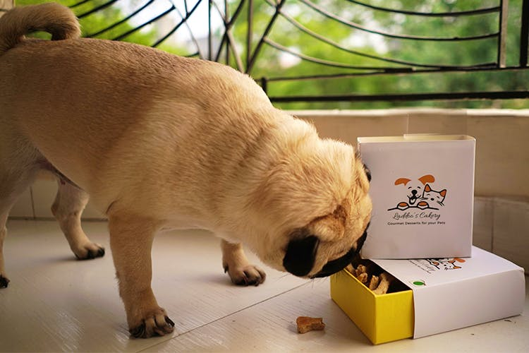 Dog-Parents, This Bakery Has Delicious Treats For Your Pets & Is A Must Try!