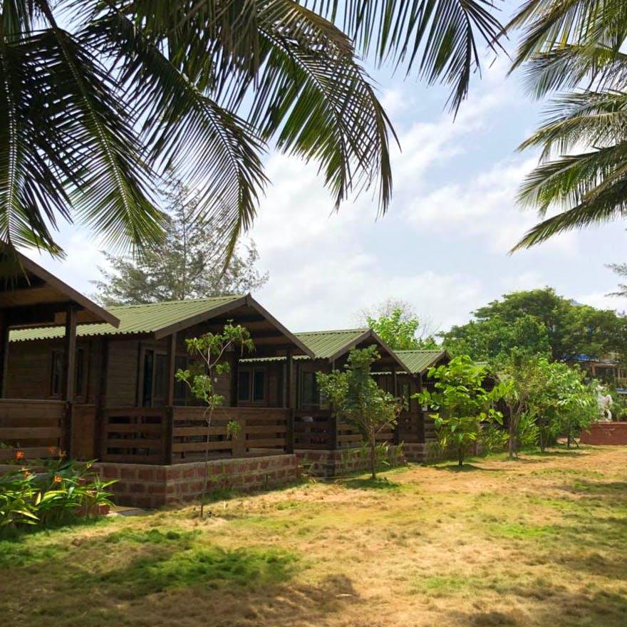 Vegetation,Property,Tree,House,Palm tree,Attalea speciosa,Elaeis,Arecales,Home,Botany