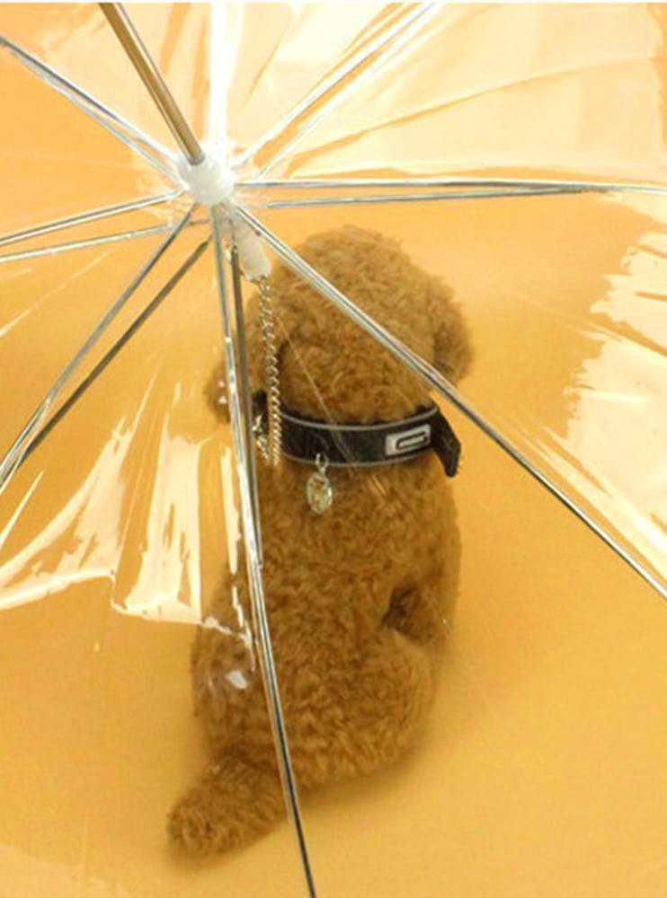 image - Protect Your Pooch: Get Your Babies These Monsoon-Friendly Products