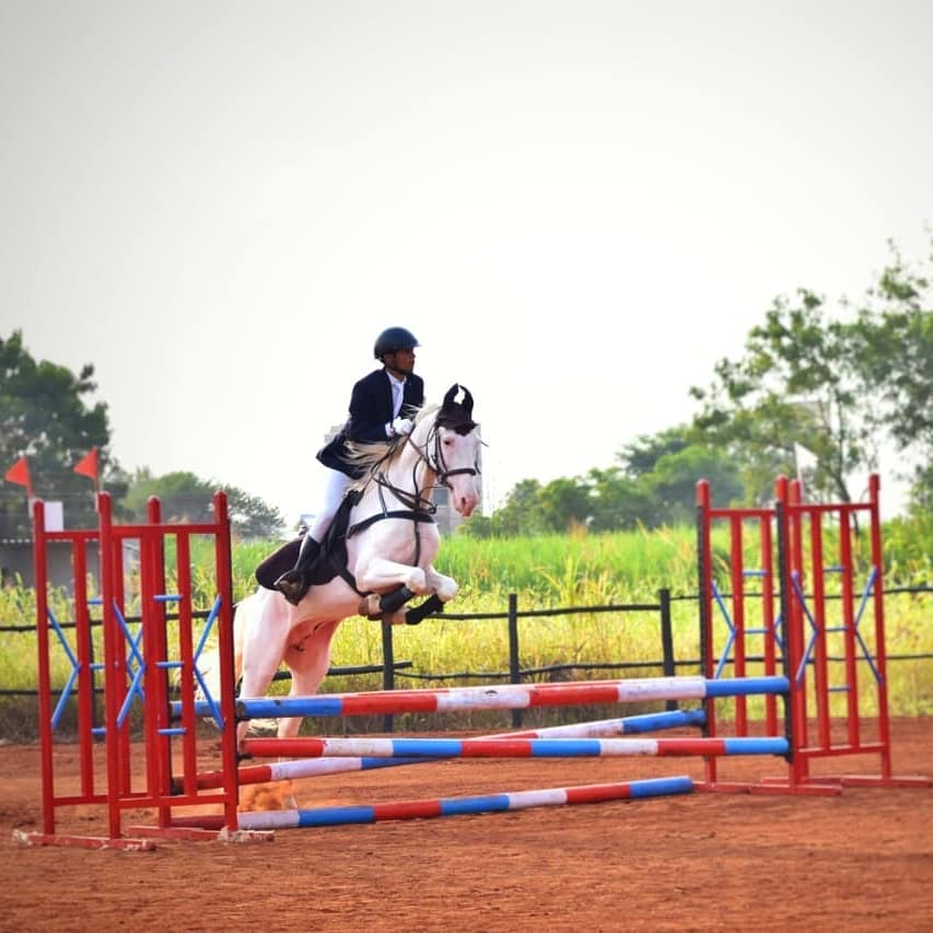 Horse,Show jumping,Equitation,Bridle,Halter,Rein,Animal sports,English riding,Equestrianism,Mammal