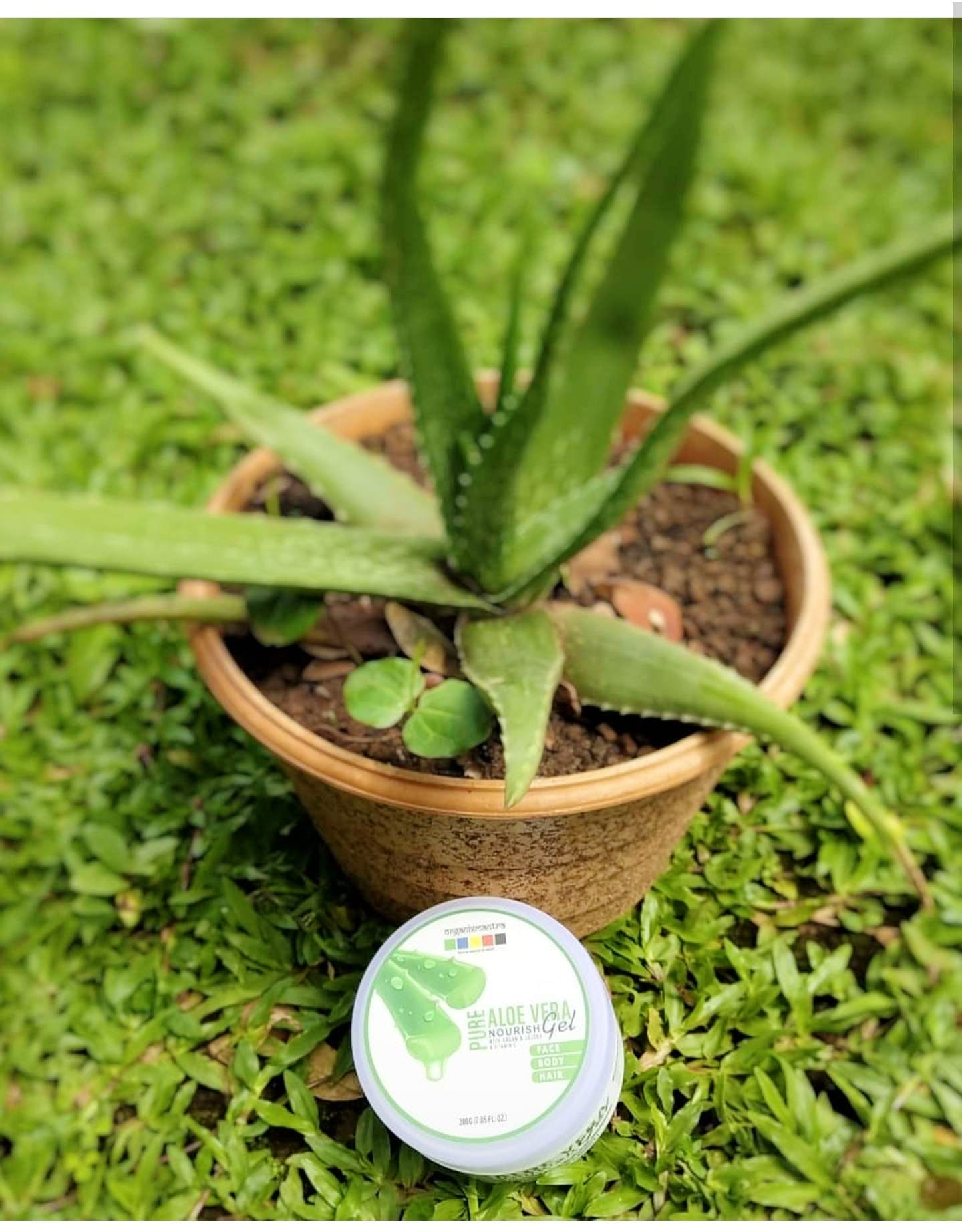 This Summer Get Your Hands On This Natural Aloe Vera Gel With Jojoba & Vitamin C