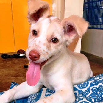 image - Four-Legged Love: Where To Adopt An Adorable Puppy (Or Kitten) From In Mumbai
