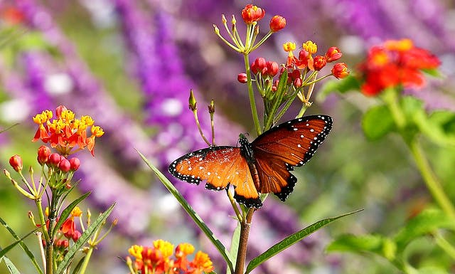 image - The Butterfly Bounty