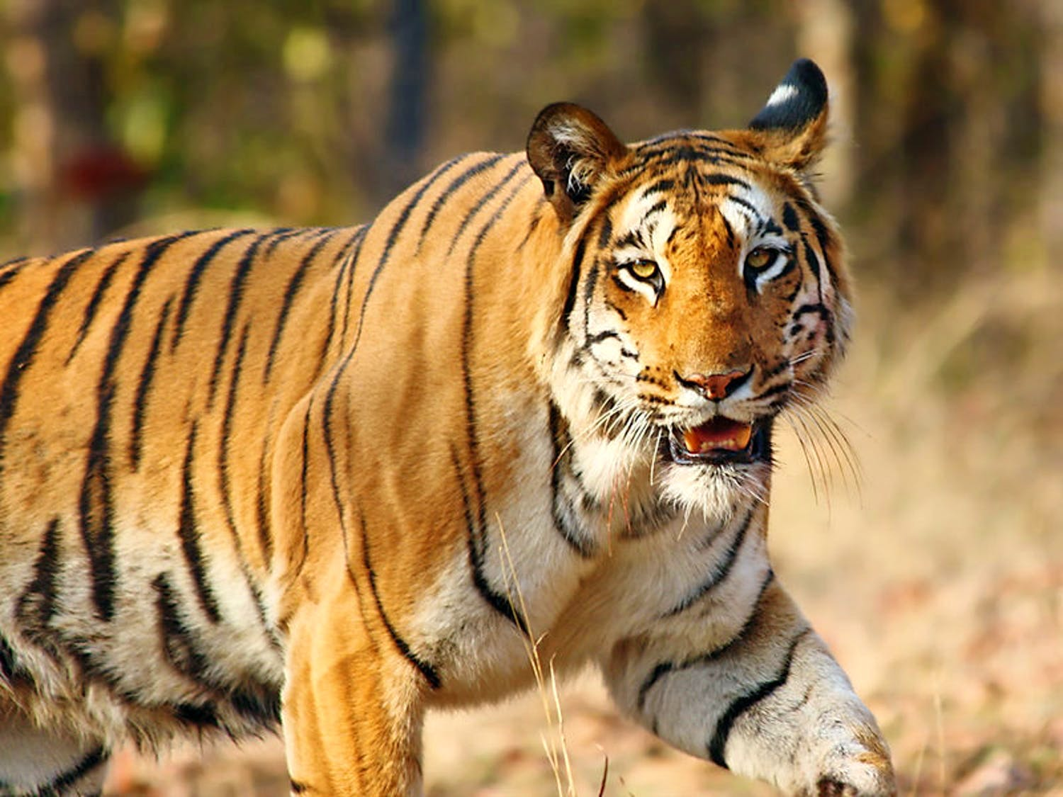 Wanna Road Trip? Explore The Wild Side And Go Tiger-Spotting In Melghat