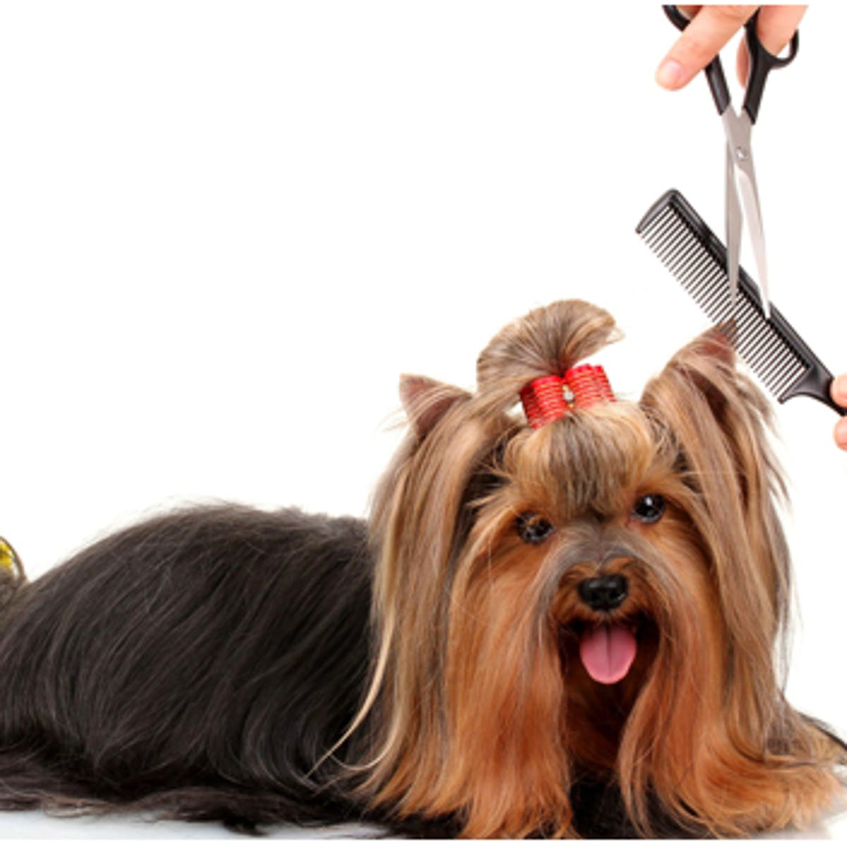 image - Happy Tails Pet Grooming & Spa
