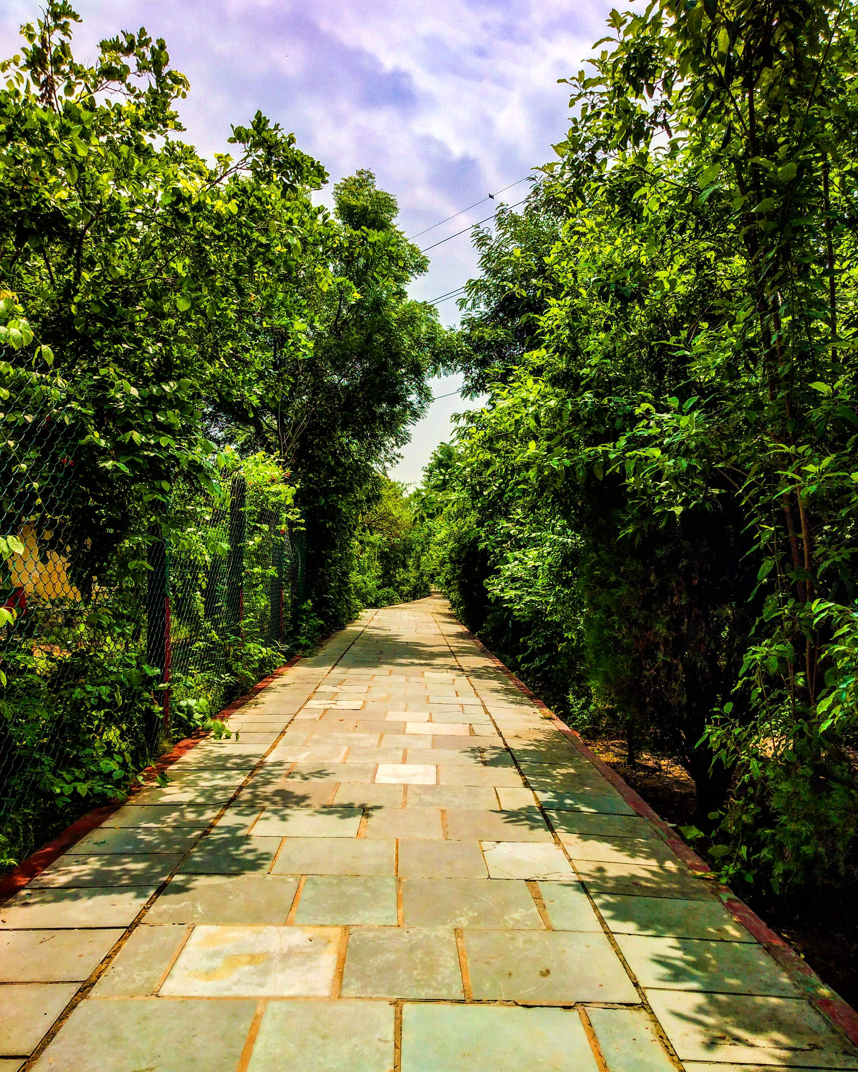 Visit These City Forests To Soothe Your Soul