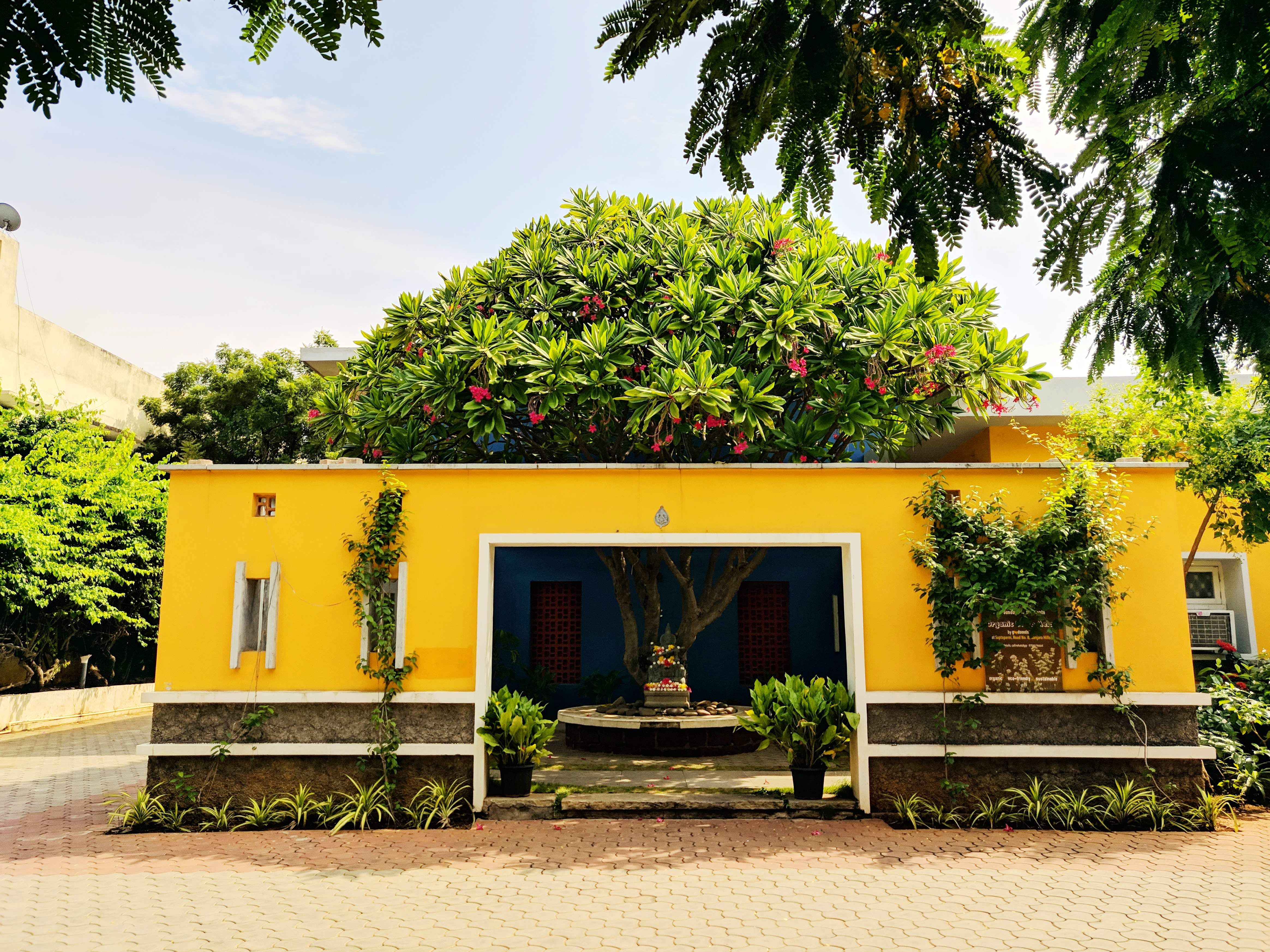House,Property,Vegetation,Home,Yellow,Building,Tree,Architecture,Real estate,Sky