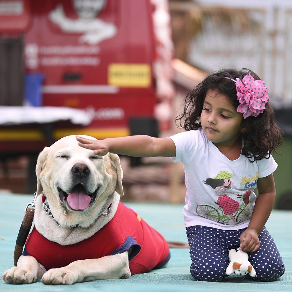 Dog,Mammal,Canidae,Dog breed,Carnivore,Child,Conformation show,Fun,Companion dog,Adaptation