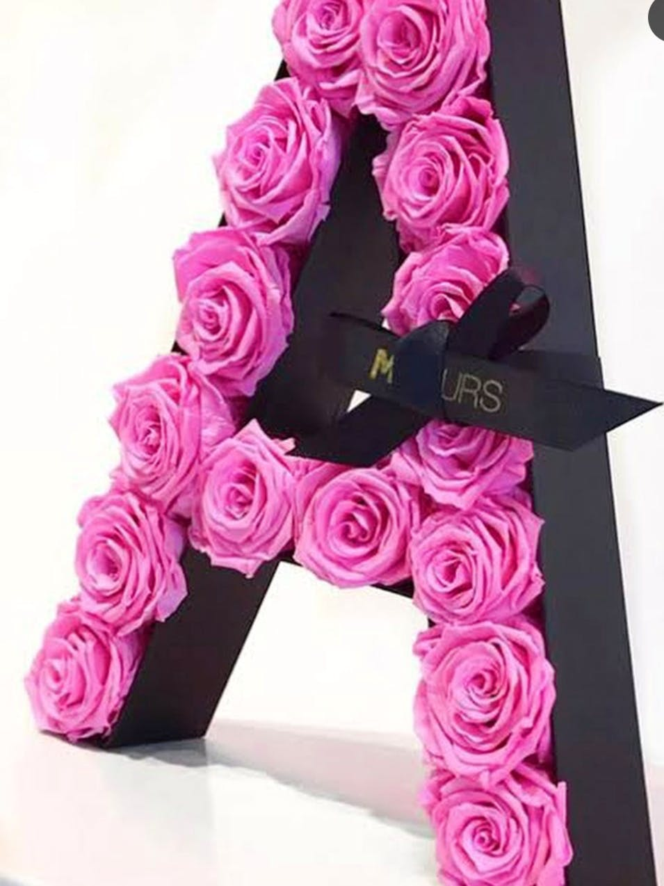 Pink,Rose,Flower,Rose family,Garden roses,Magenta,Plant,Rose order,Cut flowers,Material property