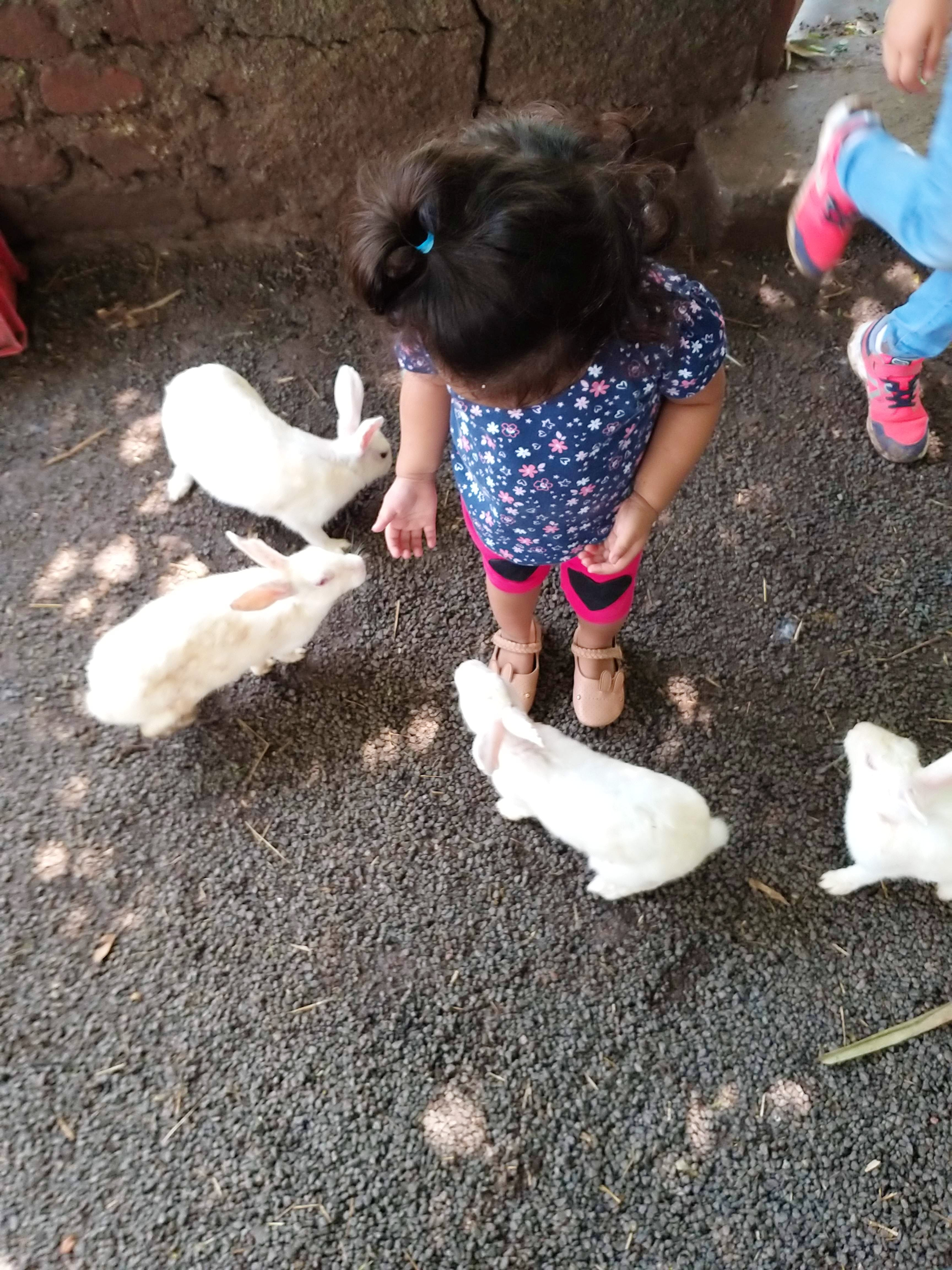 Kids Will Fall In Love With Both Animals And Nature At This Farm