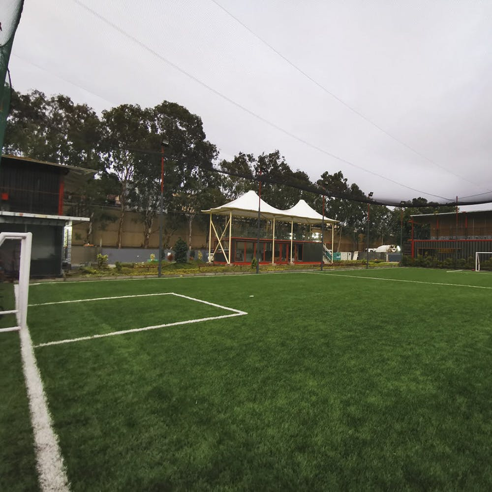 Grass,Sport venue,Lawn,Property,Artificial turf,Stadium,Team sport,Grass family,Soccer,Plant