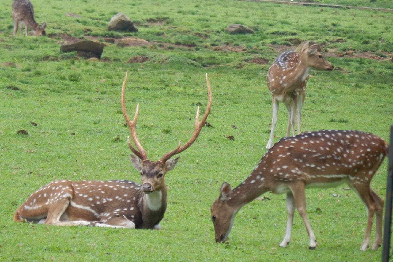 Terrestrial animal,Wildlife,Vertebrate,Mammal,Deer,Antler,Nature reserve,Wilderness,Grassland,Fawn
