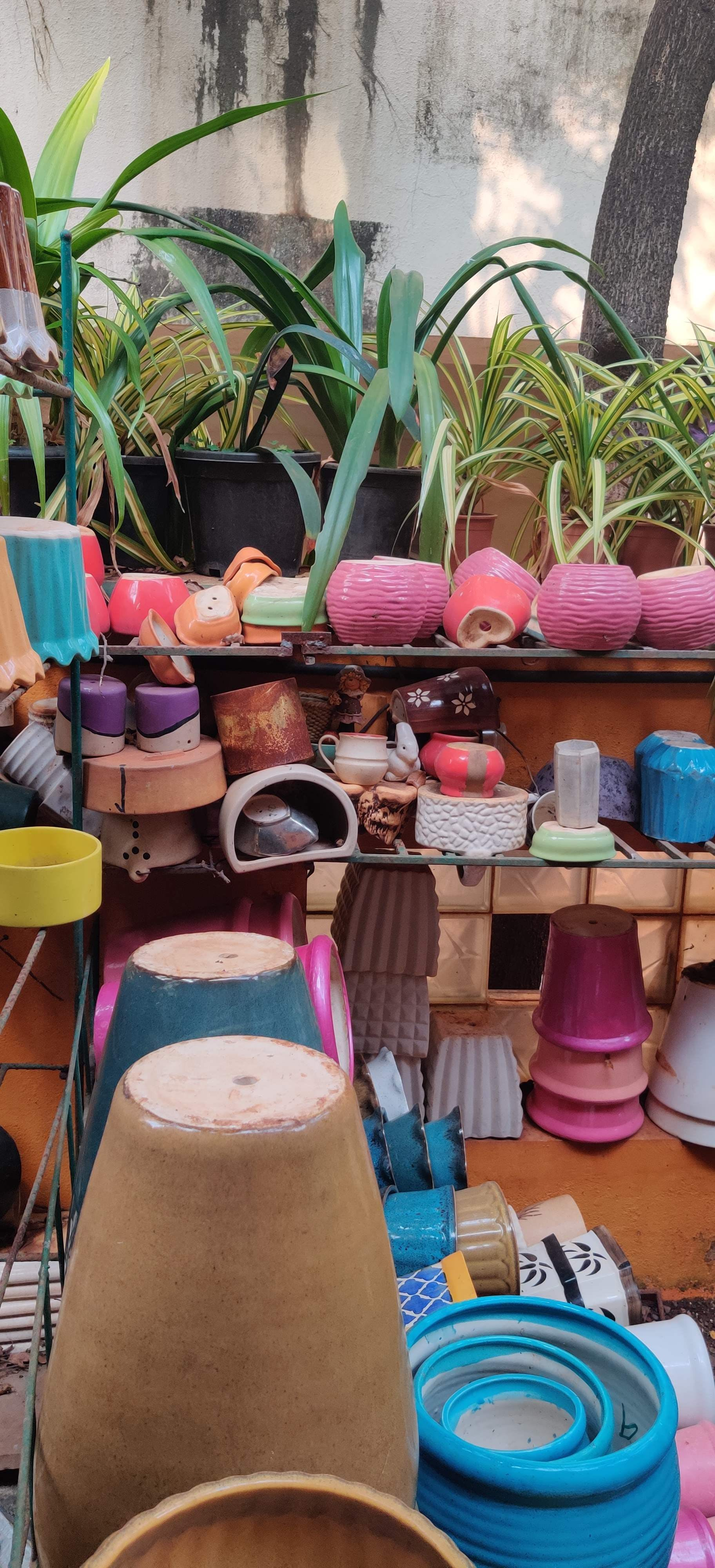 Vrishka Nursey: One Stop Shop For Plants For Home & Decor, Gifts, At An Affordable Price!