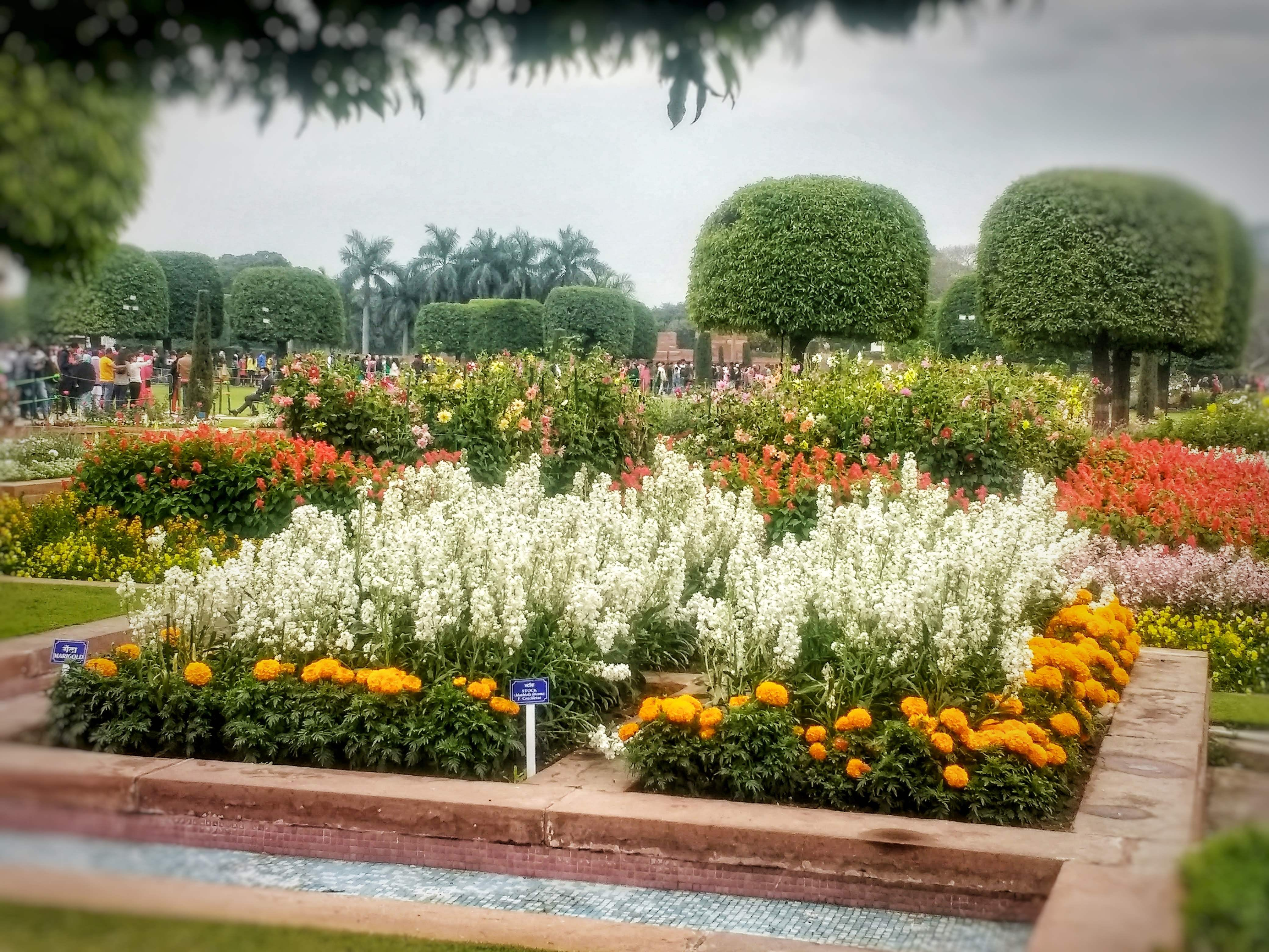 image - An Amazing Flower Show At Mughal Gardens