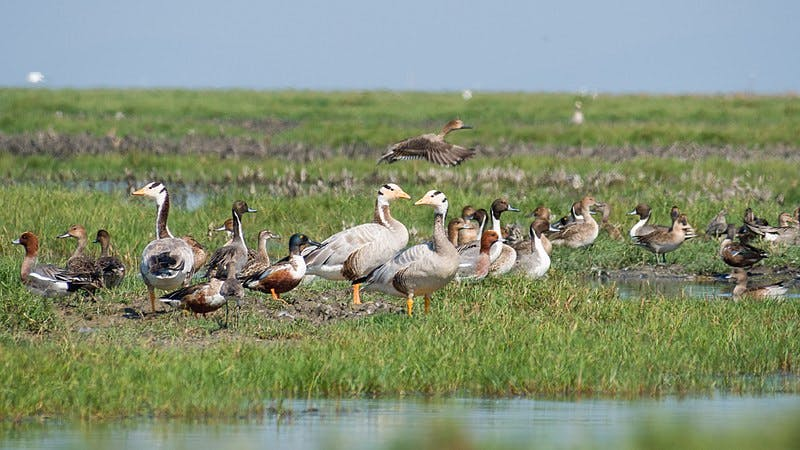 Bird,Water bird,Beak,Freshwater marsh,Grassland,Wildlife,Goose,Duck,Nature reserve,Ducks, geese and swans