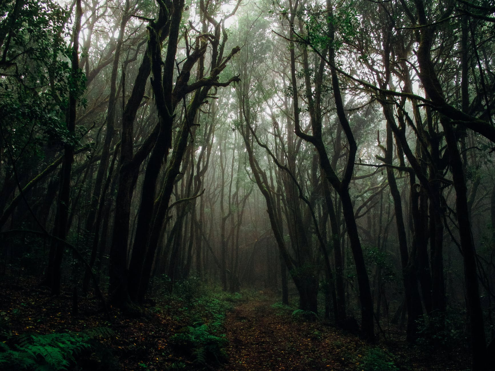 Forest,Nature,Woodland,Tree,Natural landscape,Old-growth forest,Natural environment,Atmospheric phenomenon,Green,Tropical and subtropical coniferous forests
