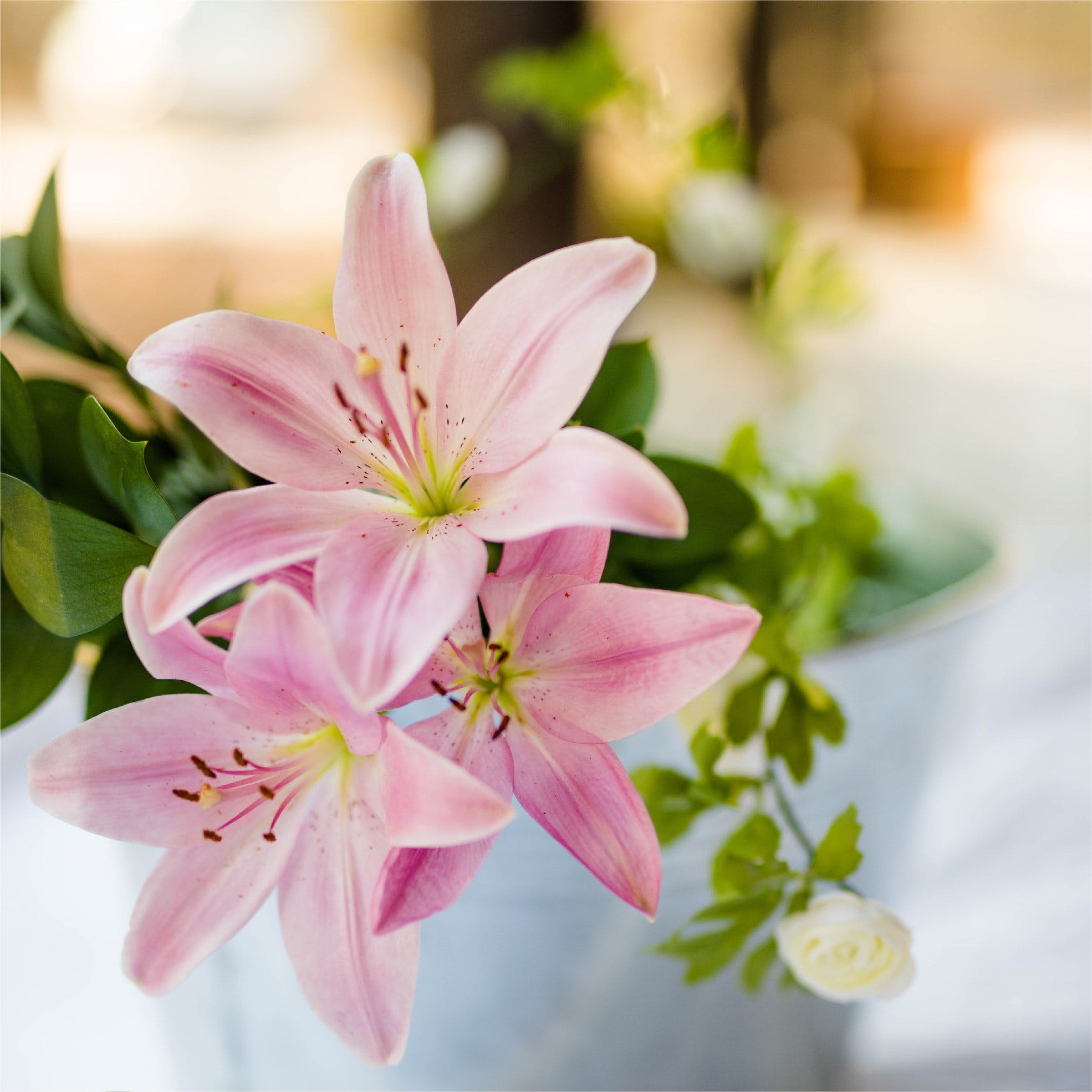 Flower,Pink,Petal,Lily,White,Plant,Flowering plant,Bouquet,Spring,Lily family