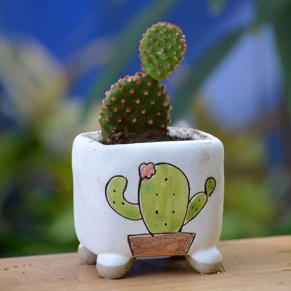 Cactus,Flowerpot,Houseplant,Ceramic,Plant,Organism,Prickly pear,Succulent plant,Figurine,Pottery