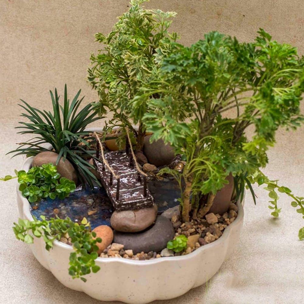 Flowerpot,Plant,Houseplant,Bonsai,Flower,Tree,Herb,Vascular plant,Grass,Fern