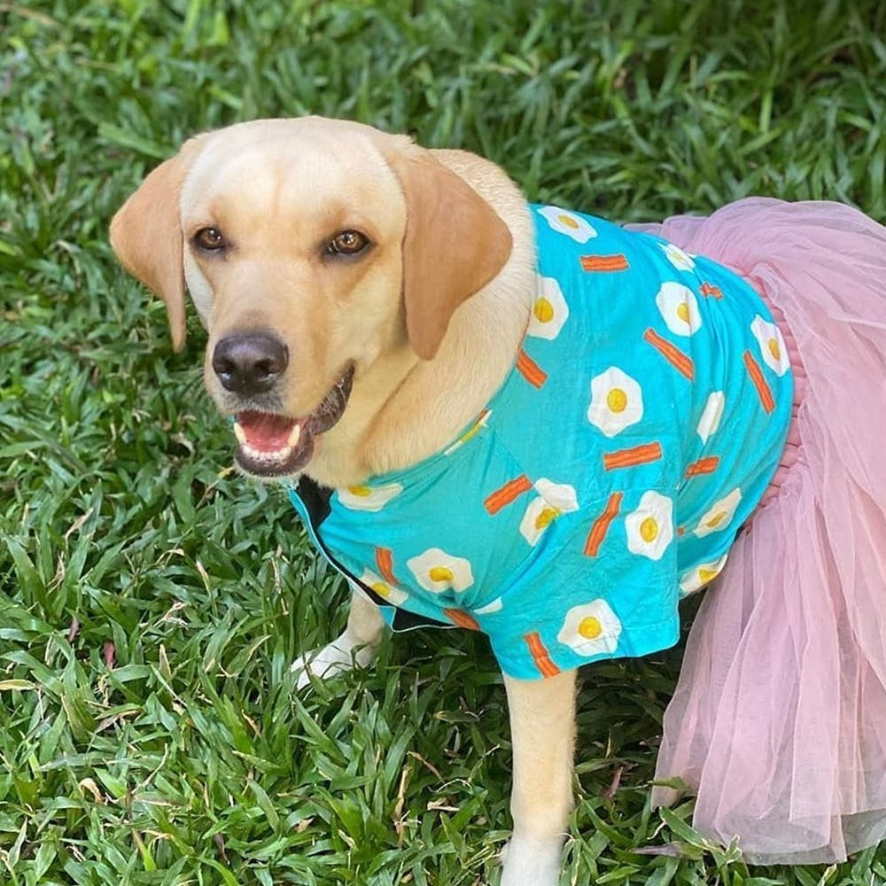 Dog,Canidae,Dog clothes,Dog breed,Companion dog,Carnivore,Grass,Puppy,Snout,Outerwear