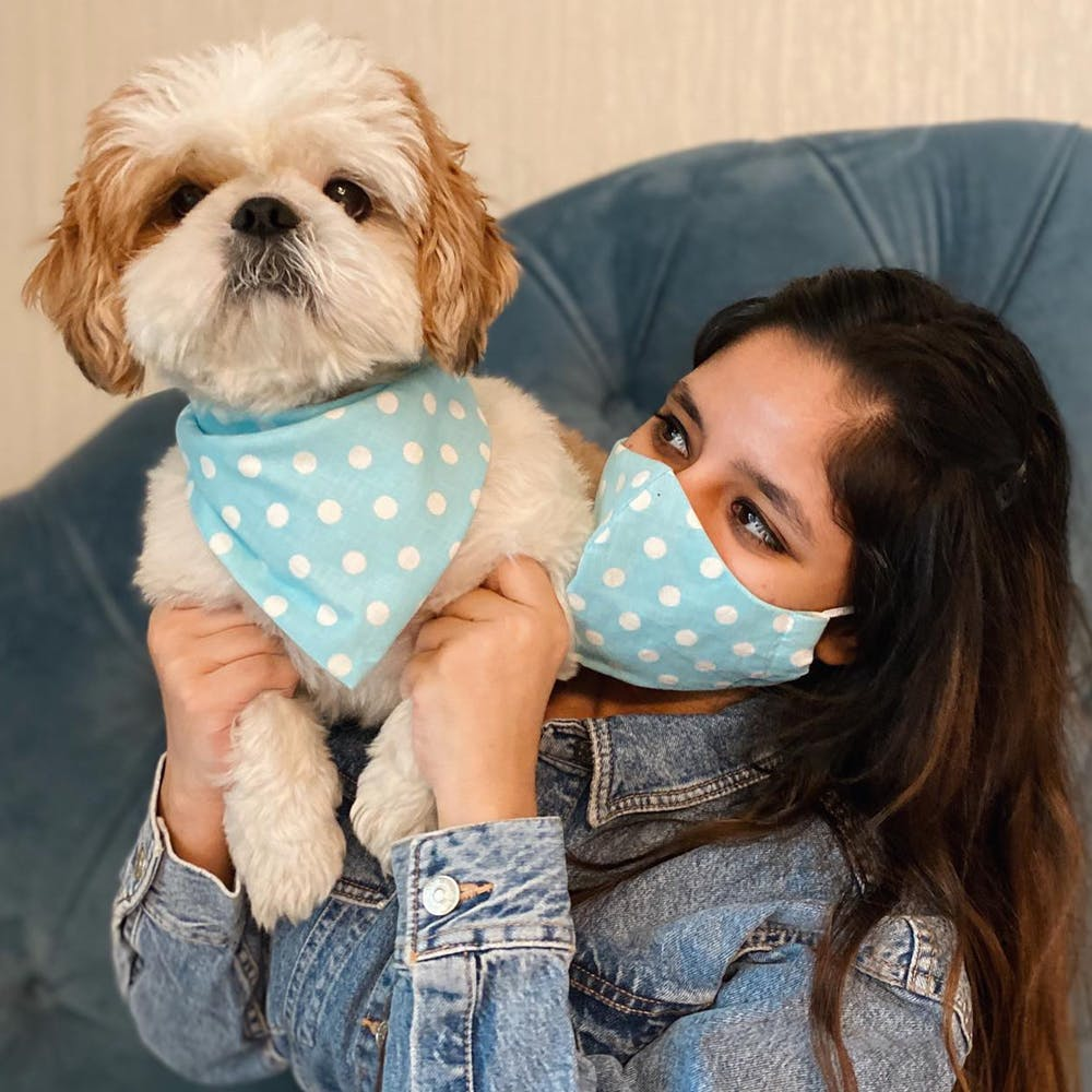 Dog clothes,Dog,Canidae,Shih tzu,Dog breed,Companion dog,Puppy love,Puppy,Morkie,Interaction