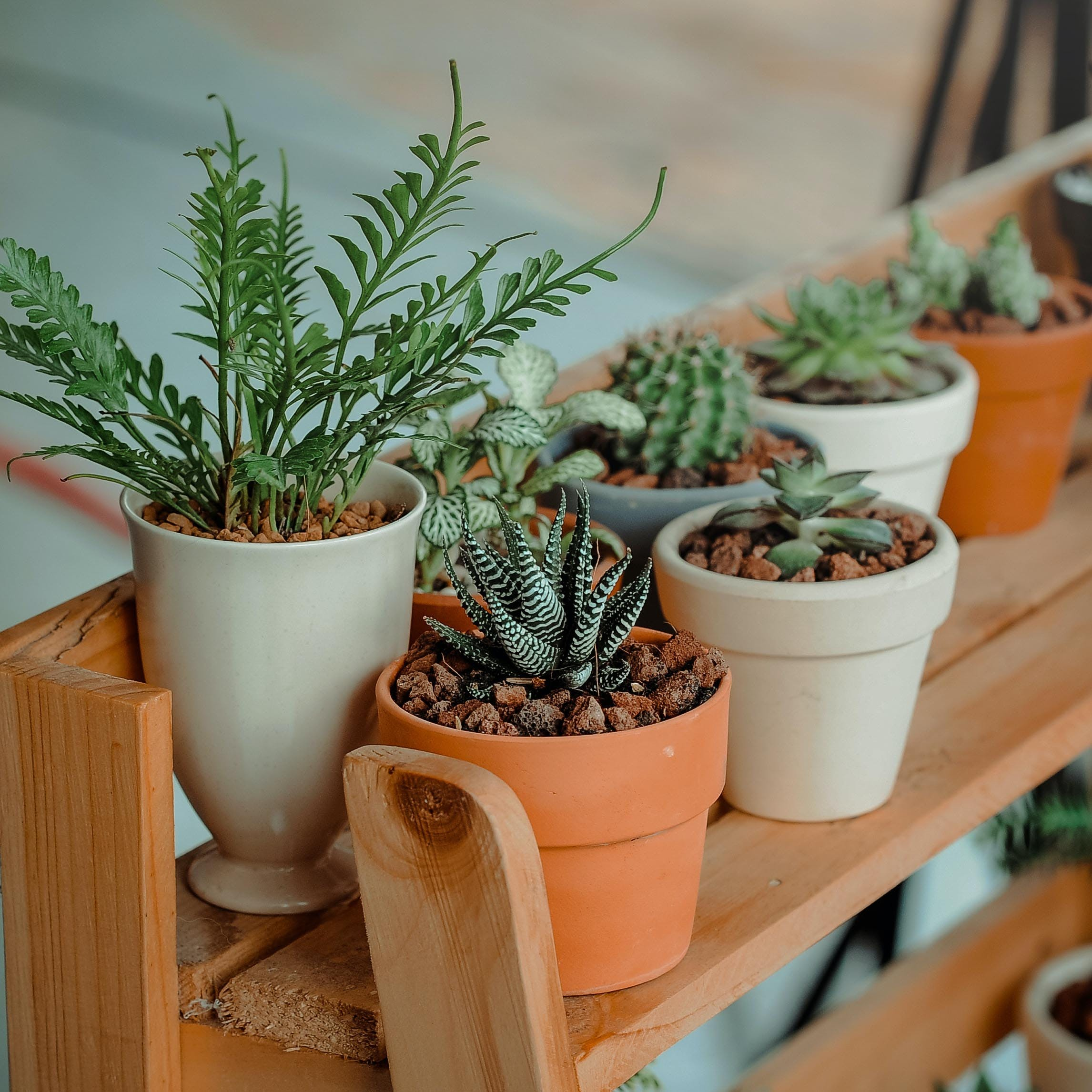 Your Search For Online Indoor Plants Ends Here