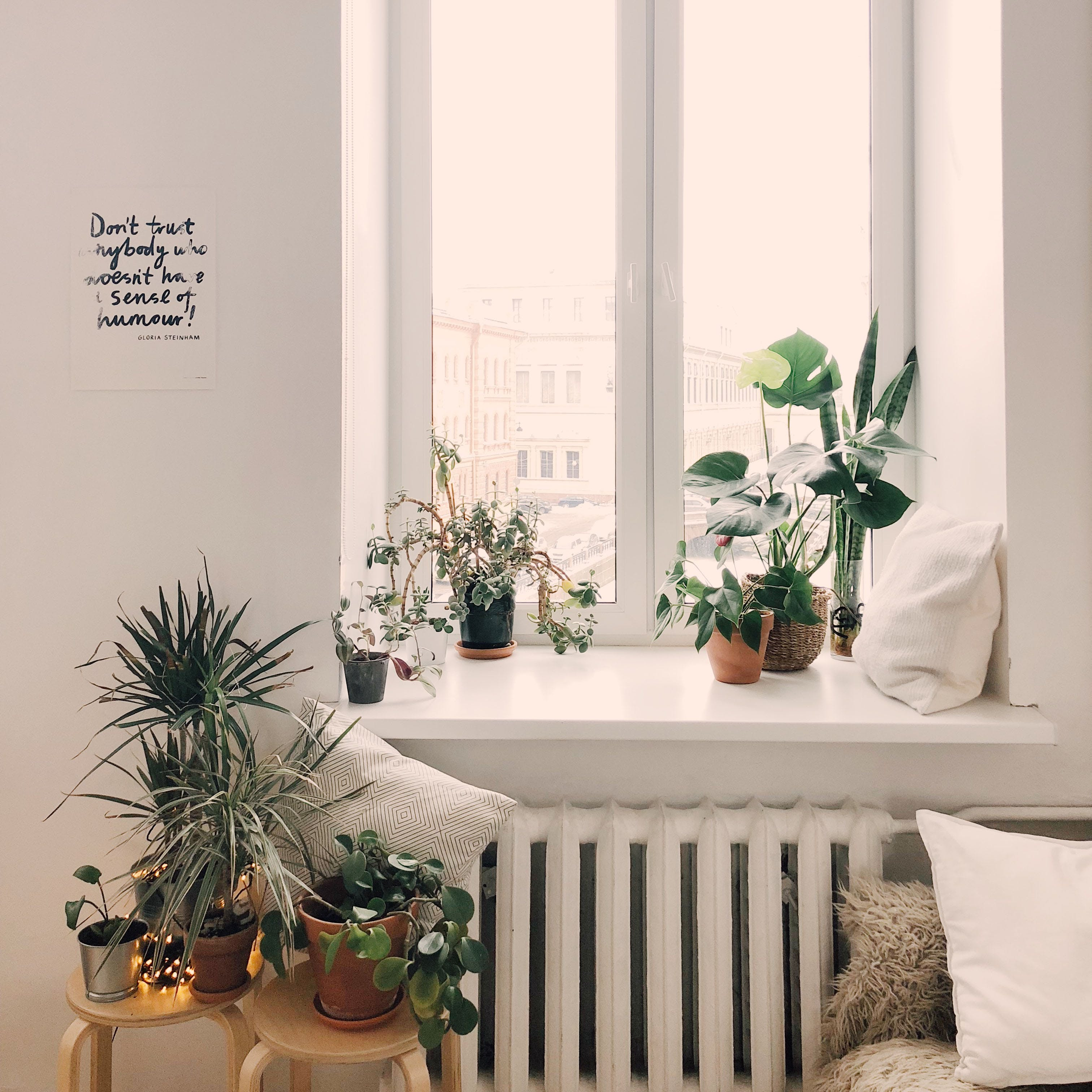 White,Room,Houseplant,Interior design,Furniture,Curtain,Table,Home,Window,Leaf