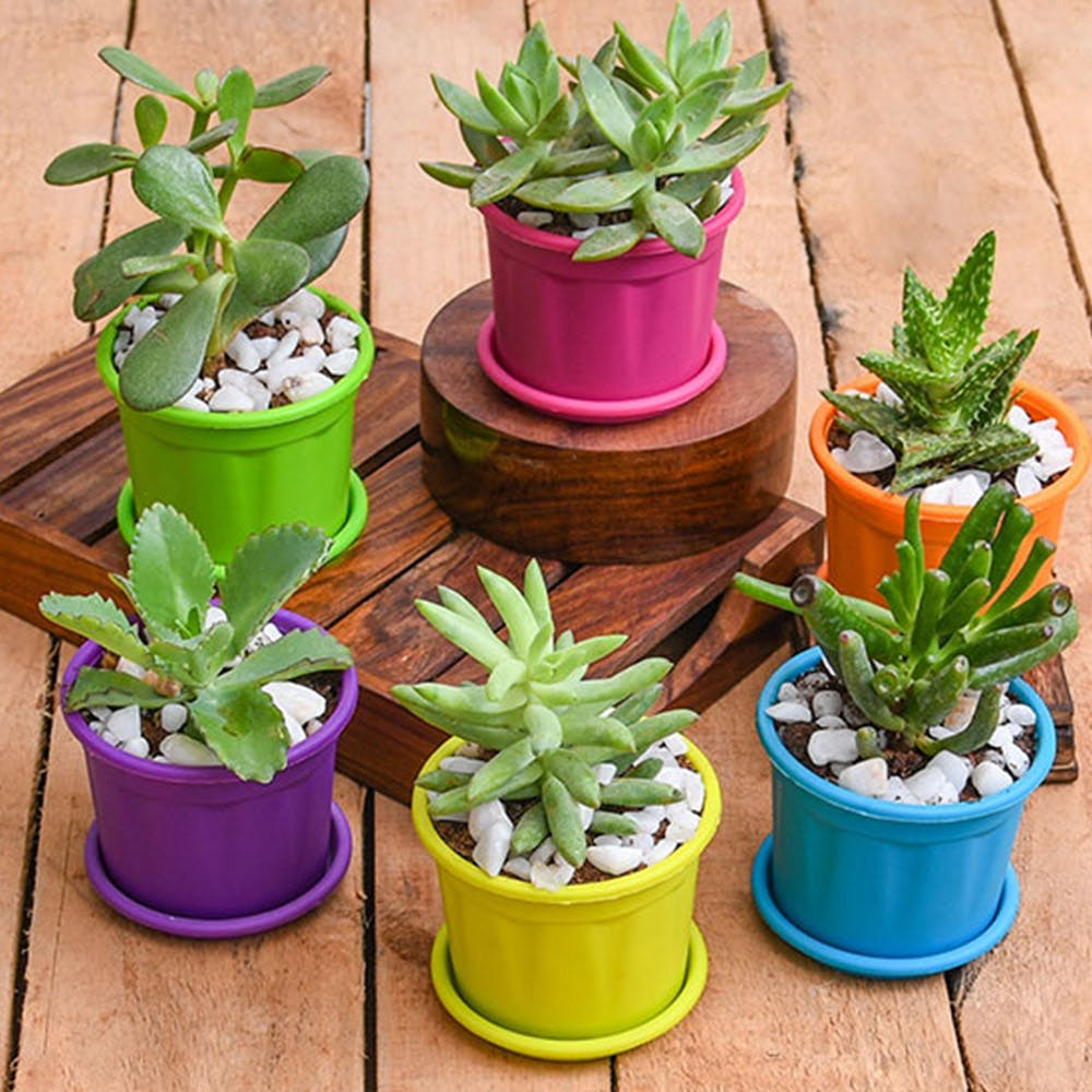 6 Best Online Places For Shopping Garden Accessories  LBB