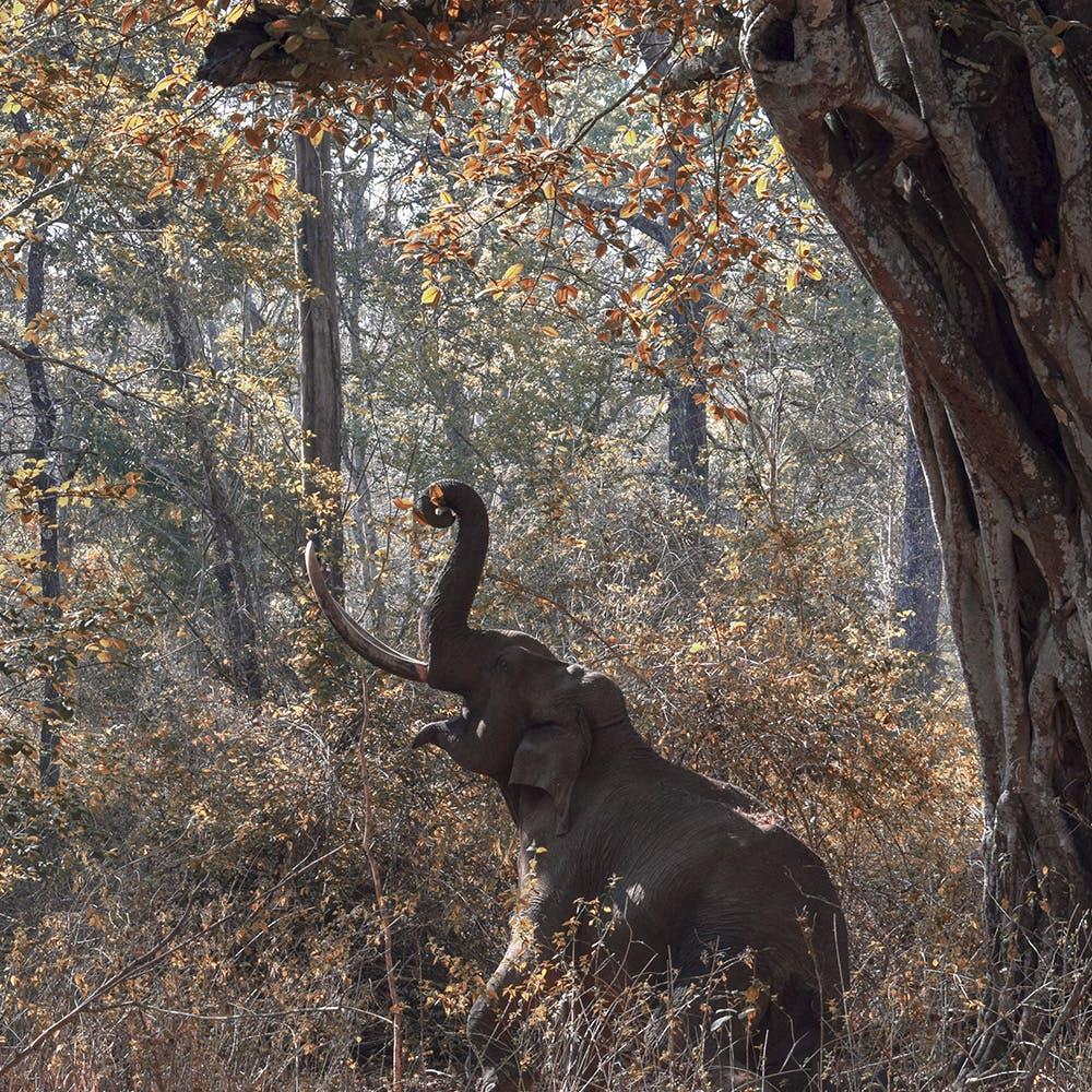 Wildlife,Tree,Terrestrial animal,Plant,Tail,Trunk