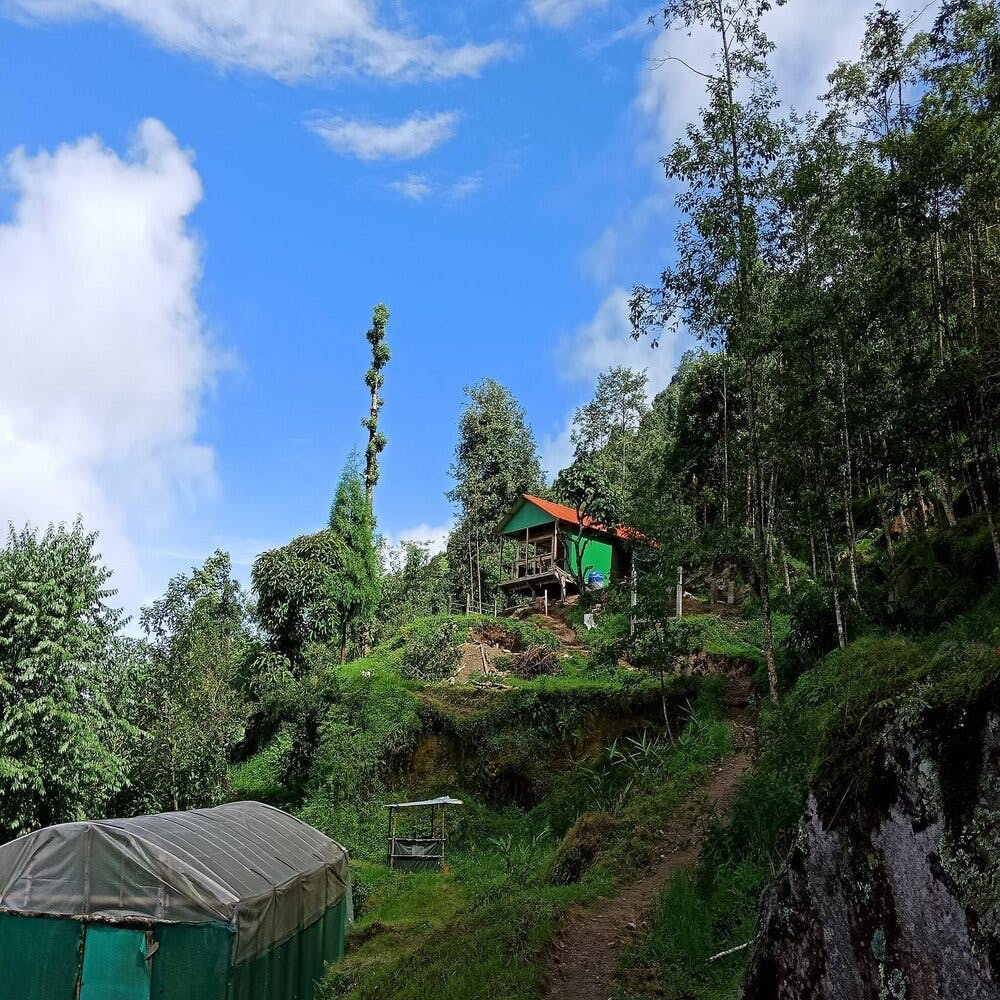 Tree,Green,Wilderness,House,Sky,Hill station,Geological phenomenon,Forest,Cottage,Cloud
