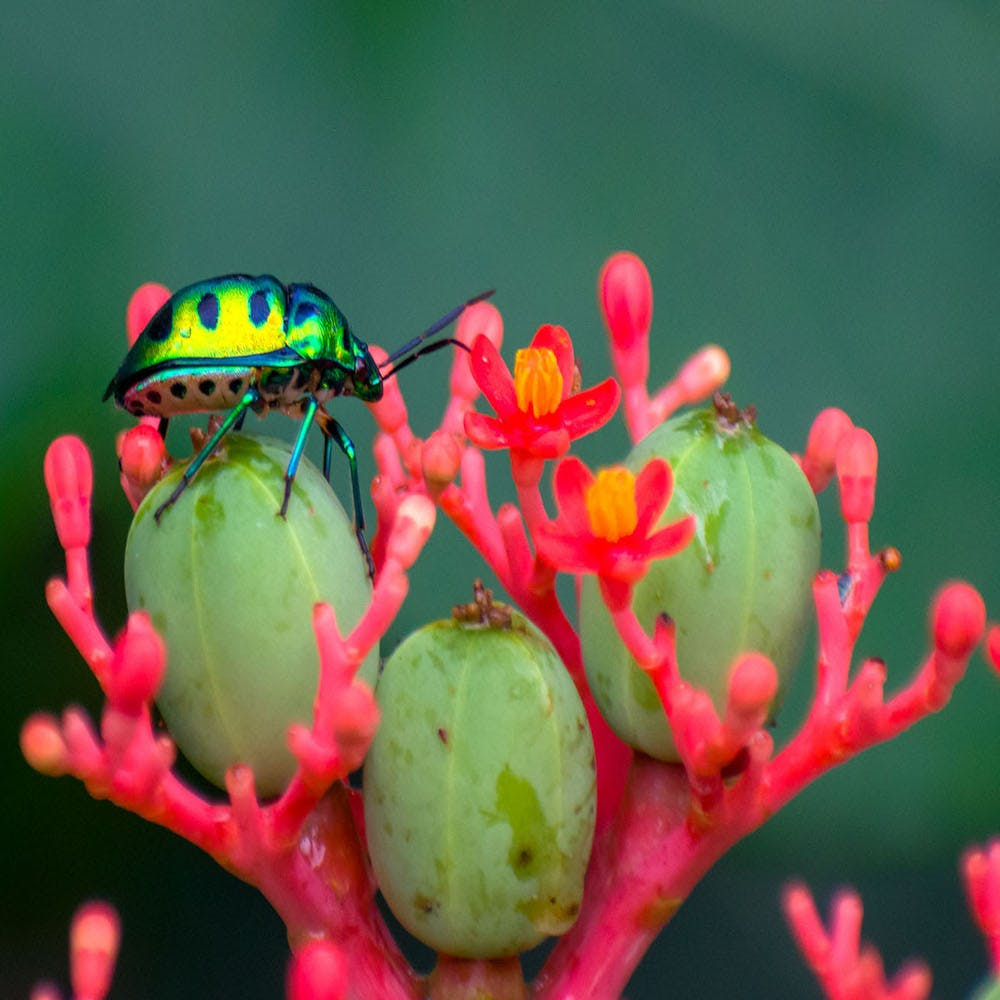 Macro photography,Plant,Flower,Organism,Bud,Adaptation,Insect,Tree frog