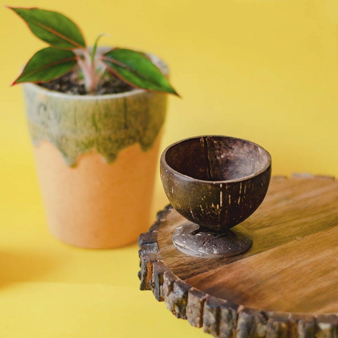 Flowerpot,Leaf,Hardwood,Houseplant,Serveware,Interior design,Pottery,Ceramic,Still life photography,Natural material