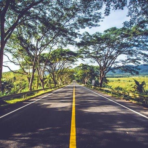 Road,Nature,Road surface,Branch,Infrastructure,Asphalt,Natural landscape,Thoroughfare,Lane,Sunlight